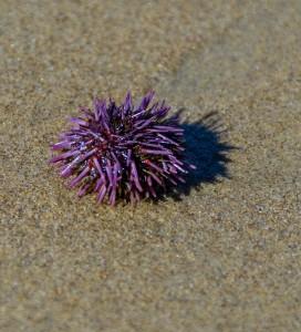 Urchin after Storm