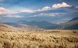 Yellowstone grassland