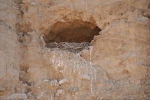 nest close 2