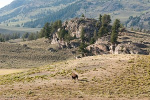Yellowstone Rock Outcrop