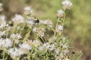 Bumblebee Landing