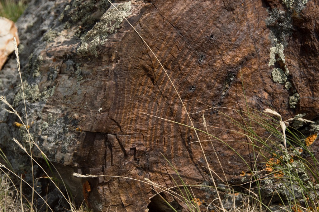 Petrified Wood-7